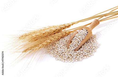 Barley grains isolated on white background. Fotobehang