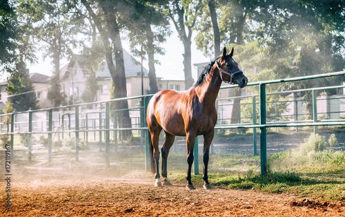 Fényképezés Horse on paddock in riding school