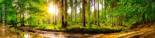Mata na ścianę w kuchni  piekna-panorama-lasu-z-drzewami-strumieniem-i-sloncem