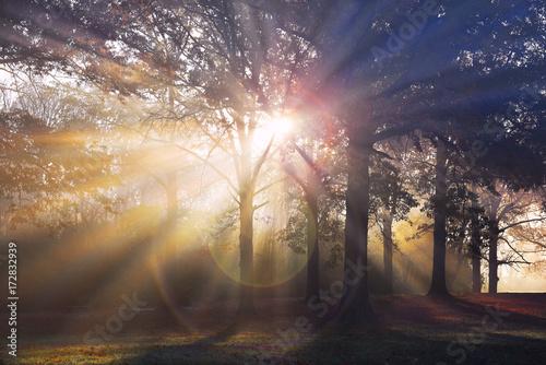 Sun Rays Through the Forest