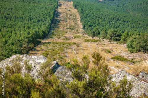 Valokuva Huge firebreak and pine tree forest