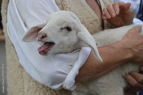 The lost sheep in the arms of the good shepherd