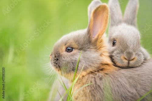 Obraz na płótnie kuschelnde Kaninchenbabies