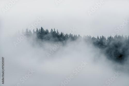 Minimalna mgła na górze drzew wtyka z gęstej mgły w Alaska w czarny i biały