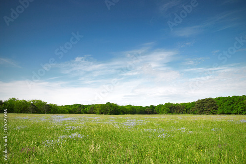 Canvas Print Green meadow and blue sky with forest