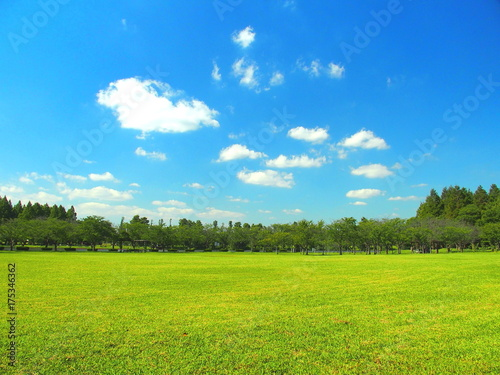 Fototapeta 秋の草原と林風景