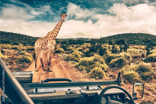 Fototapeta premium Afrykańskie safari dzikiej przyrody