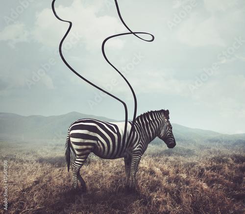 Fototapeta Zebra i paski XXL