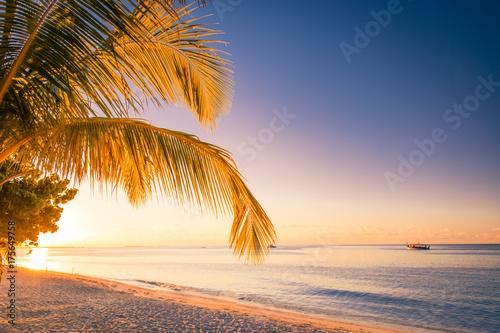 Sunset beachwith palms