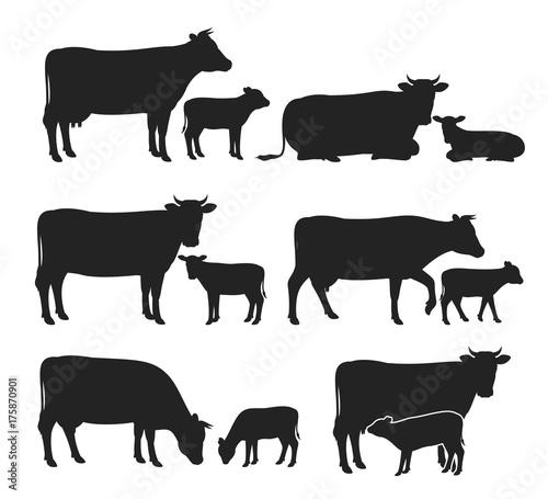 Cuadros en Lienzo Vector cow and calf silhouettes collection