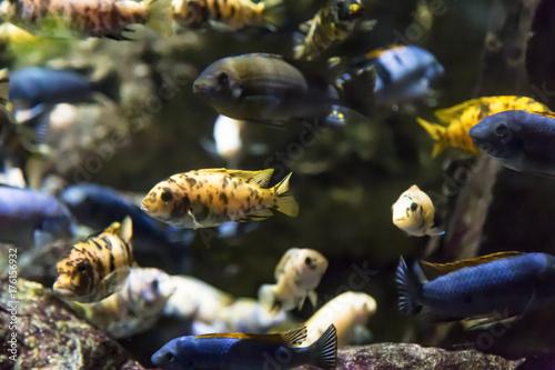 Various colorful fish swimming underwater