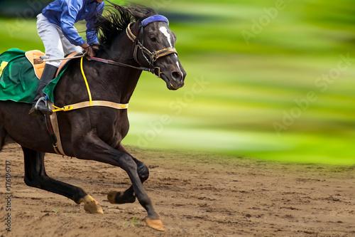 Fotografia Race horse in run