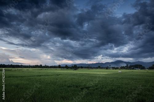 Obraz na plátně Dark stormy clouds over rice field.