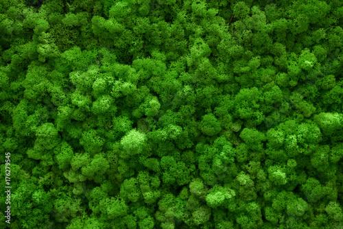 Green moss covered the ground Fototapeta