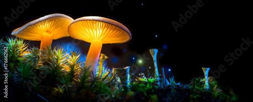 Mushroom. Fantasy glowing mushrooms in mystery dark forest closeup