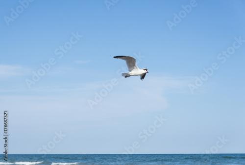 Seagull on the Mediterranean sea