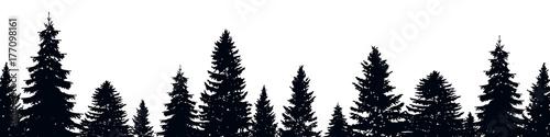 Photo Fir trees
