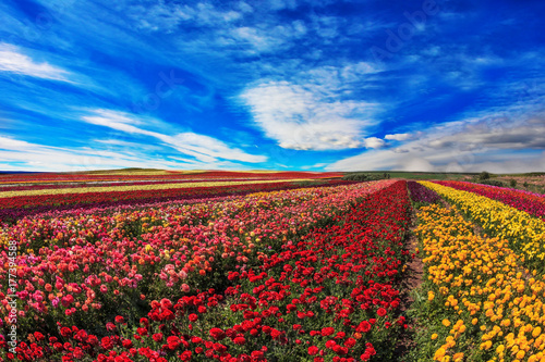 Farmer fields with the flowers