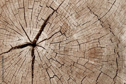 wood stump texture.