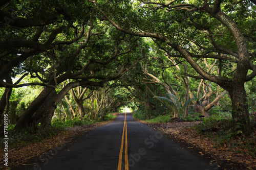 Carta da parati The jungle of Maui Island along the famous road to Hana