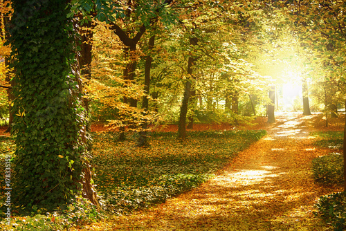 surrounded by trees in the autumn robe of a park alley with the sun falling between the trees