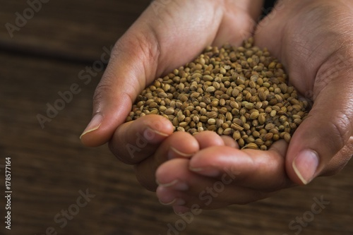 Hands holding coriander seeds against wooden table