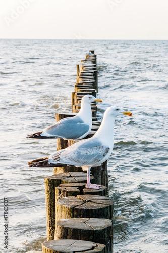 zwei Möwen sitzen am Strand