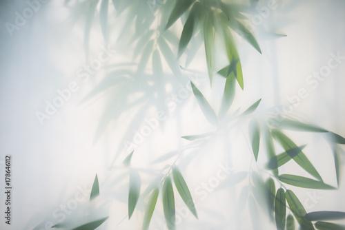 liscie-bambusa-we-mgle-za-matowym-szklem