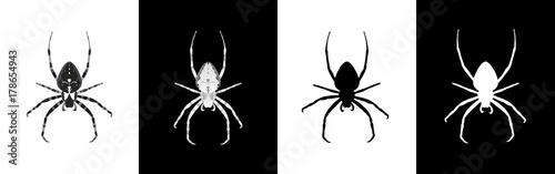 Fotografia Set of spider insect vector illustration