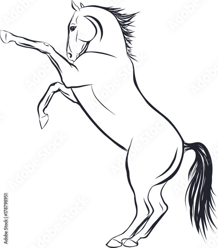 Fotografie, Tablou Sketch of the horse standing on hind legs.