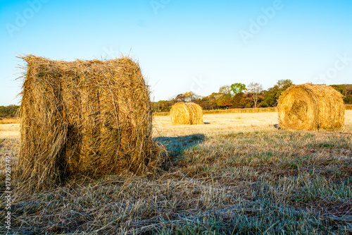 Farmland with haystacks in autumn. Fototapet