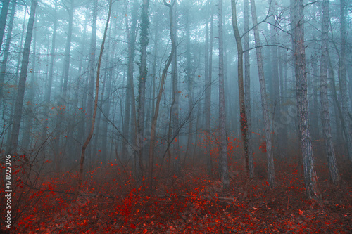 colorful autumn forest on misty morning