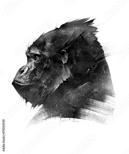 Fotografia sketch head of a monkey gorilla on a white background