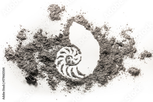 Seashell or ocean snail drawing symbol
