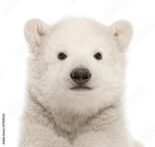 Polar bear cub, Ursus maritimus, 3 months old, against white background