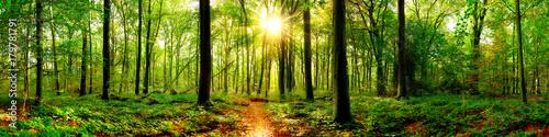 Fototapeta Panorama lasu z jaskrawym słońcem w środku szeroka