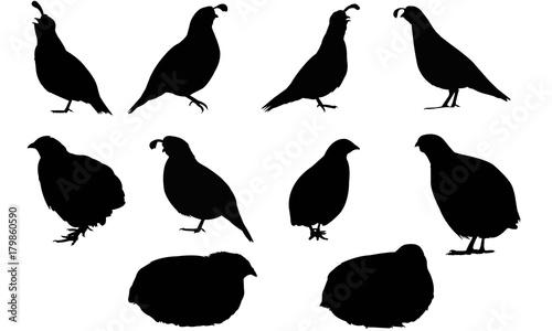 Photo New world quail Silhouette Vector Graphics