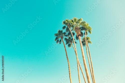 Fotografía retro california palms