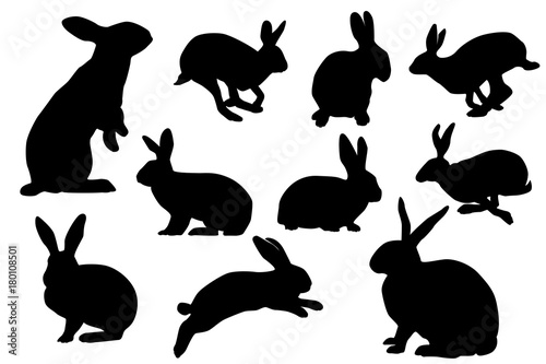 Fotografie, Obraz bunny silhouette sets