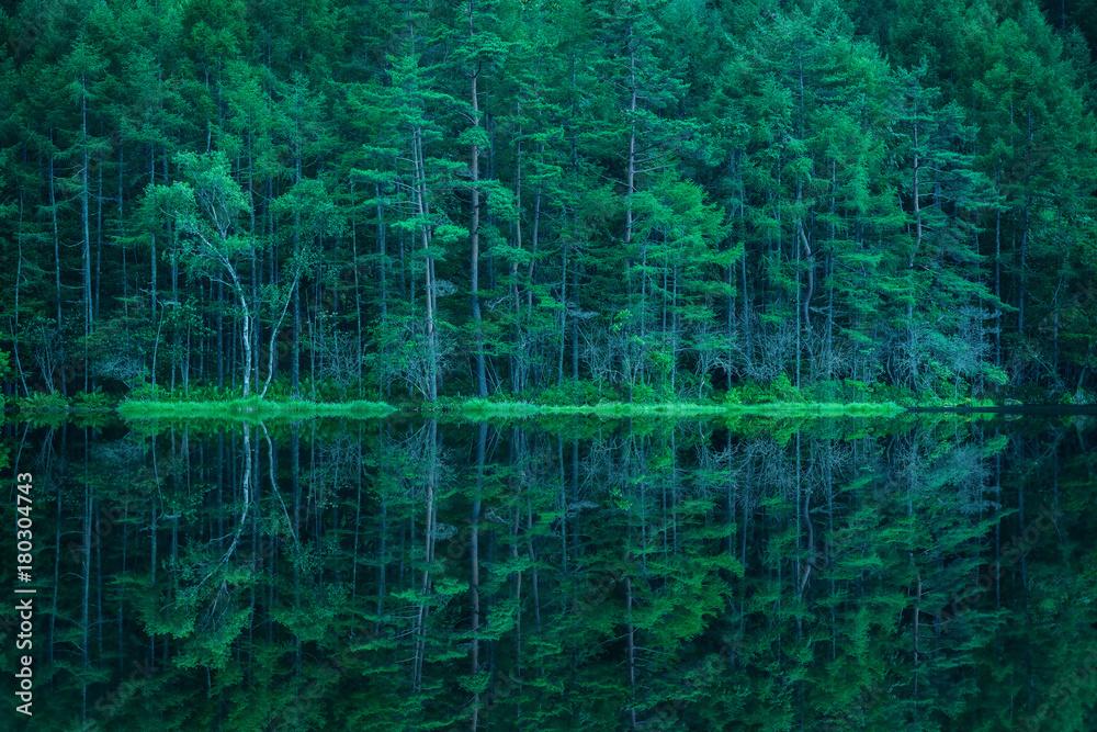 Fototapeta zielony las nad brzegiem wody