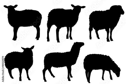 Fototapeta premium sylwetki owiec
