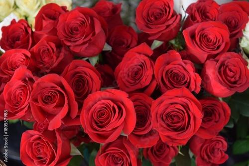 Ein prachtvoller Strauß wunderbarer roter Rosen #180557988