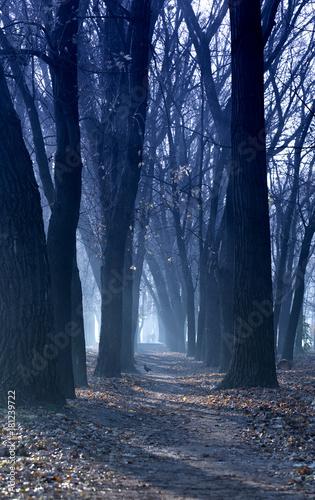 mornin misty alley