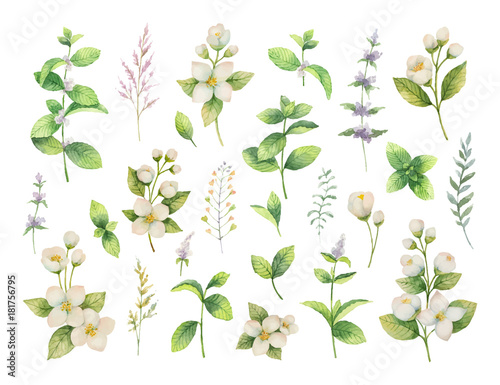 Hand drawn vector watercolor set of herbs and spices. Fototapeta