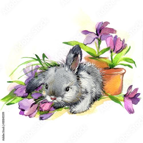 Akwarela królik i kwiaty