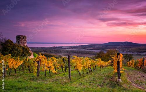 Obraz na plátne Colorful sunset over vineyards at lake Balaton, Hungary