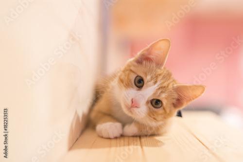 Wallpaper Mural cat