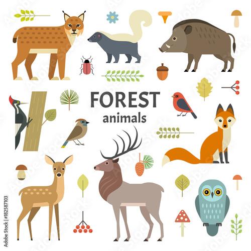 Fotografia Vector illustration of forest animals: elk, doe, hedgehog, fox, owl, lynx, skunk, wild boar, woodpeckers and other birds, isolated on background