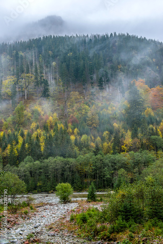 górski las w chmurach