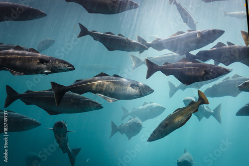 Sea aquarium in Alesund Norway